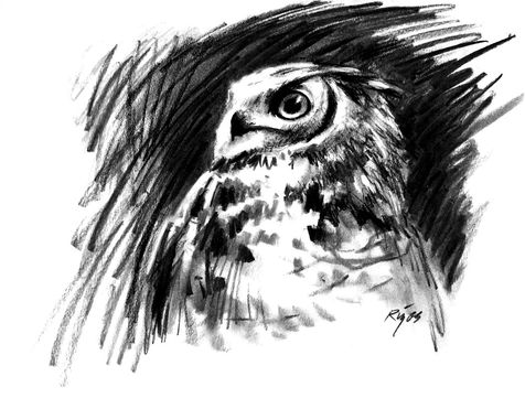 Great Horned Owl Charcoal Drawing