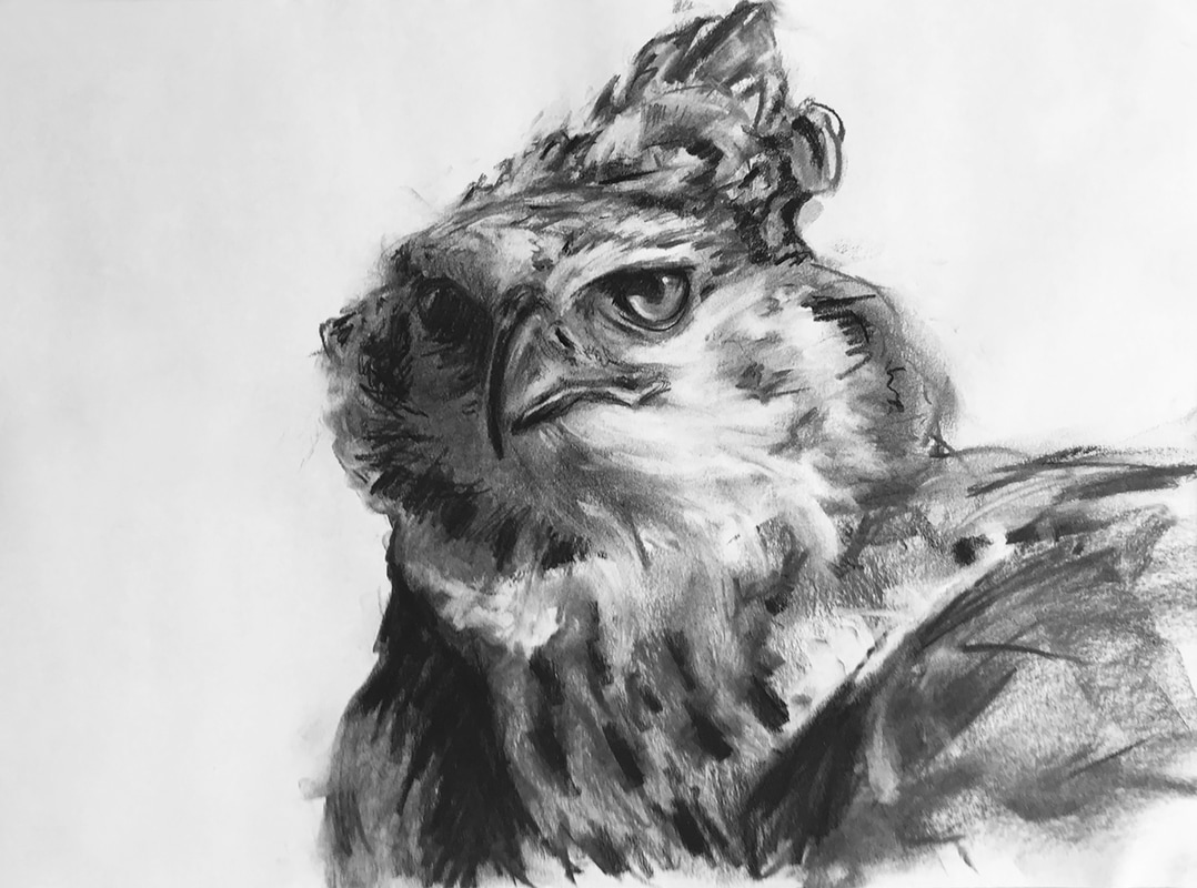 African Crowned Eagle charcoal drawing